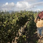 Bolivia-worker-carrying-a-buldle-of-grapes